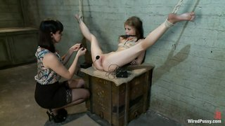 Electrified cage bdsm medical